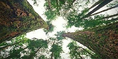 föredrag: Hur träd kommunicerar med varandra